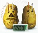 שעון תפוחי אדמה